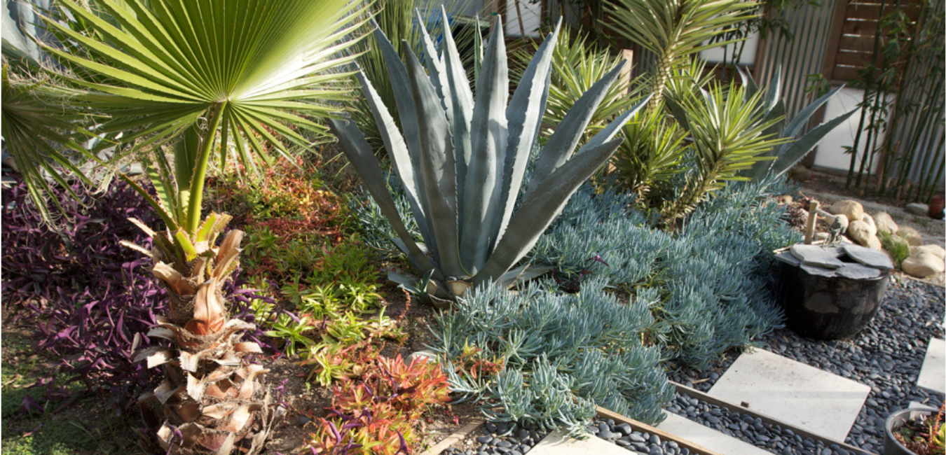 What is Xeriscaping_ - Caribbean Dreams Landscapes - Phoenix Arizona
